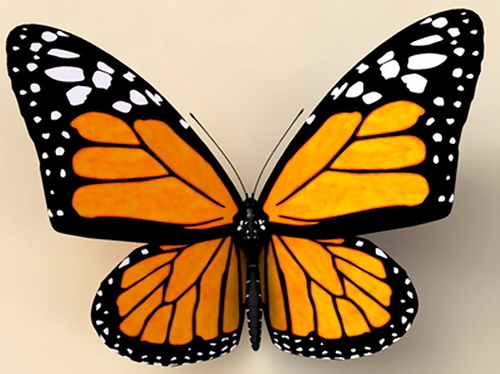 https://www.supertorchritual.com/underground/images/17/butterfly.png