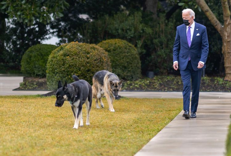 Biden's Dog Champ Passes Away